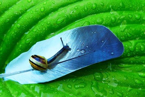 The Feather Of A Bird, Leaf, Rain, Drops, Snail, Slide