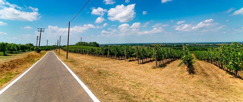 Trail, Road, Vineyards, Path, Traveler, Pathway
