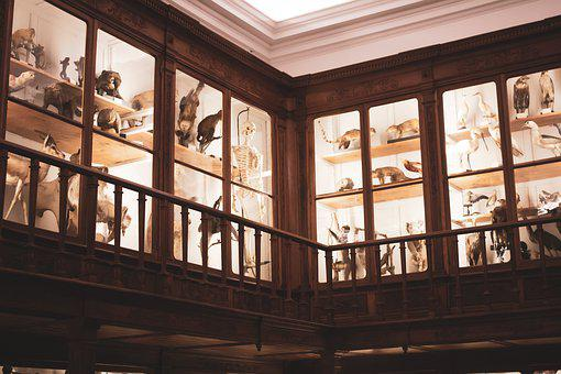 Museum, Animals, Instruments, Experiment, Old, Science