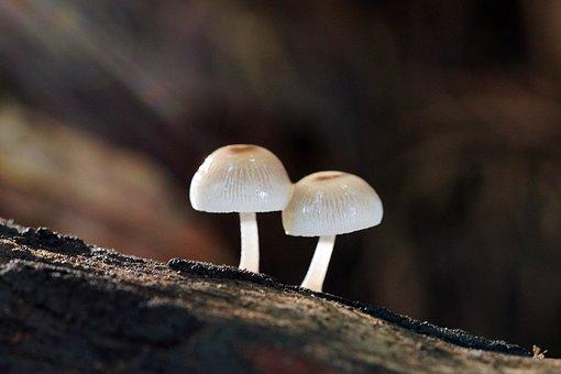 Mushroom, Mshroom, Wild, Mountain, Nature, Summer