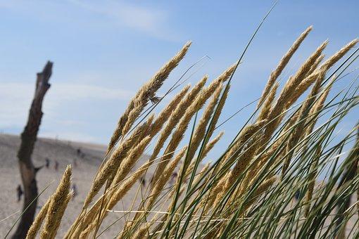 Landscape, Grass, Sky, The Sand Dunes, Tree, Summer