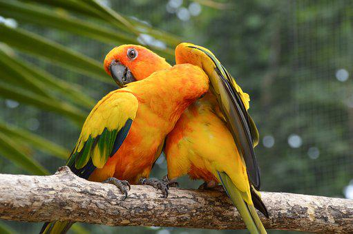 Conure, Bird, Nature, Branch, Colorful, Wildlife