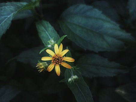 Flower, Green, Petals, Yellow, The Leaves