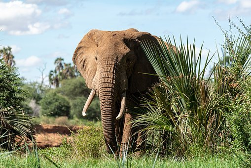 Elephant, Africa, National Park, Animal, Safari, Mammal