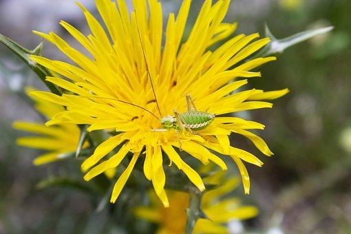 Flower, Nature, Insect, Animal, Petals, Garden, Flora