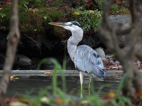 Animal, Pond, Water, Grass, Green, Bird, Wild Birds