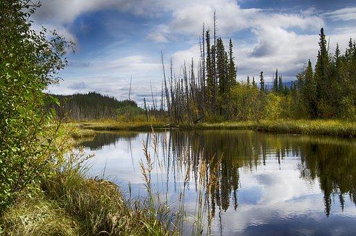 Alaska, Reflection, Pond, Pool, Bog, Water, Arctic