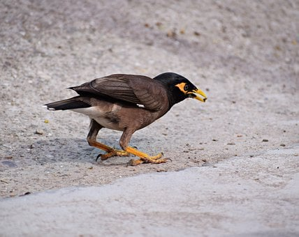 Bird, Feeding, Nature, Animal, Wildlife, Plumage, Bill