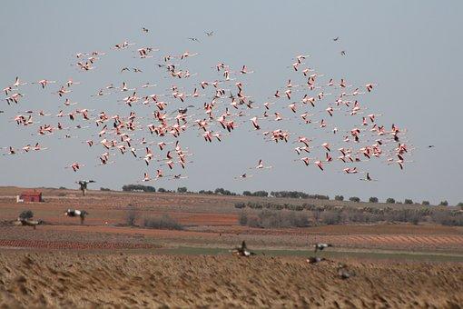 Flemish, Nature, Animals, Birds, Gaps