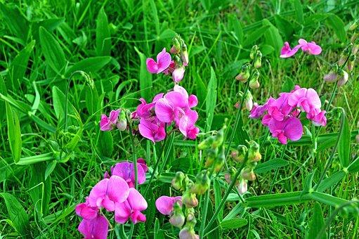 Flower, Floral, Blossom, Bloom, Plant, Flora, Botany