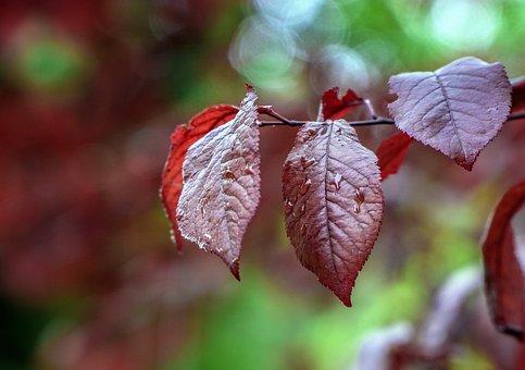 Leaves, Red, Autumn, Nature, Colorful, Season, Tree