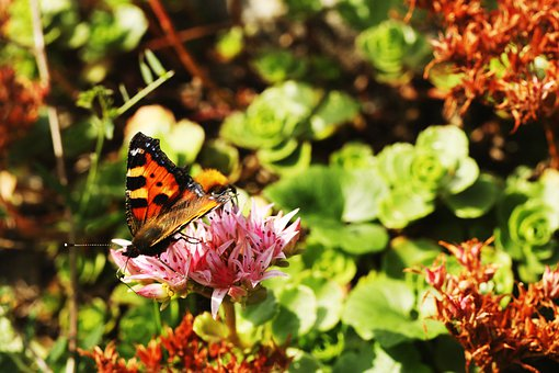 Butterfly, Summer, Nature, Insect, Wing, Animal, Flower