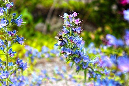 Flower, Outdoors, Daylight, Blue Flower, Bee
