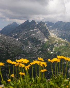 Flowers, Mountain, Alps, Nature, Landscape, Summer