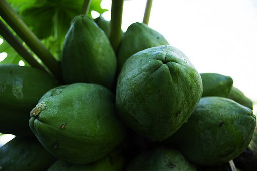 Papaya, Fruit, Food, Costs, Health, Eat, Exotic, Market
