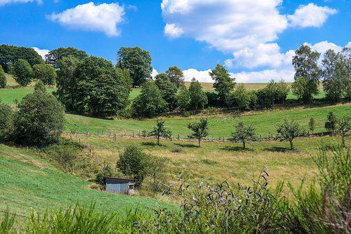 Trees, Meadow, Landscape, Hill, Nature, Rural, Summer