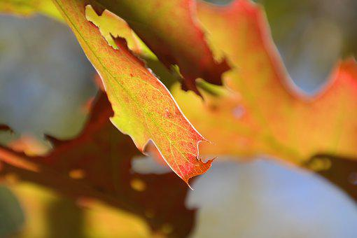 Autumn, Leaf, Fall Foliage, Yellow, Red