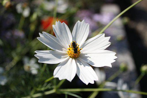 Bee, Flower, Insect, Bloom, Pollen, Macro, Garden