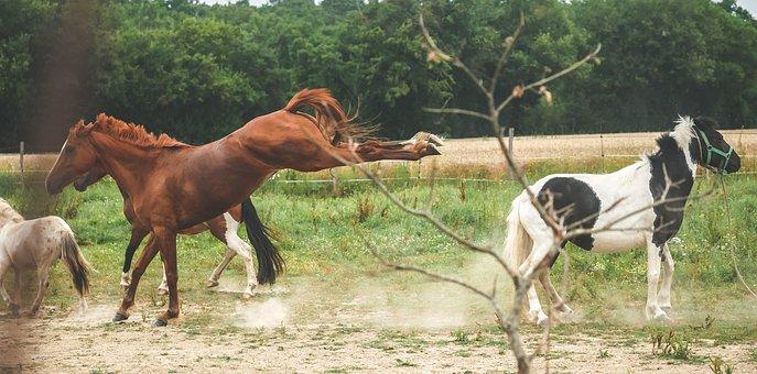 Horse, Mare, Pre, Mane, Nature, Pastures