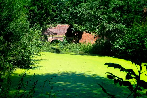 Nature, Green, Beautiful, Lying, Wood, Forest, Moss