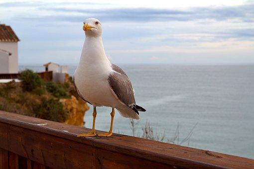 Portugal, Albufeira, Algarve, Portuguese, Nature