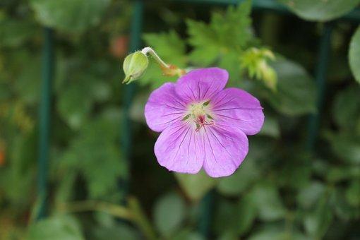 Wild Flower, Blossom, Bloom, Close Up, Flower, Nature