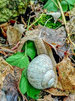Snail, Leaf, Nature, Invertebrates, Shell, Autumn