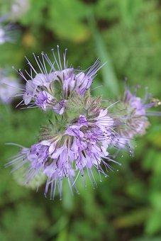 Wild Flower, Flower, Purple, Nature, Plant, Blossom