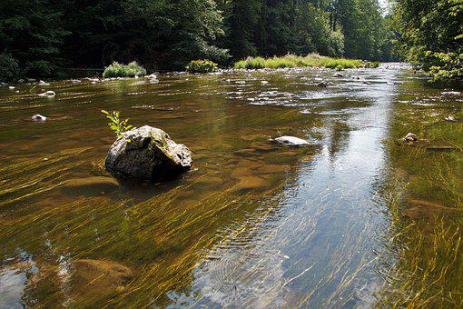 River, Wild Eagle, Water, The Flow Of, Flowing, Shallow