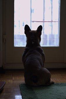 Dog, Window, Bulldog, Pet, Romantic, Friend, Animal