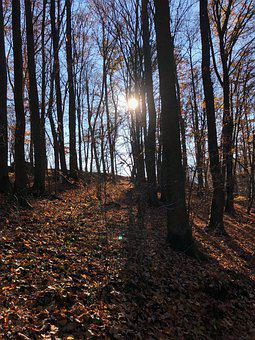 Forest, Trees, Sun, Fog, Path, Secret, Autumn, Light
