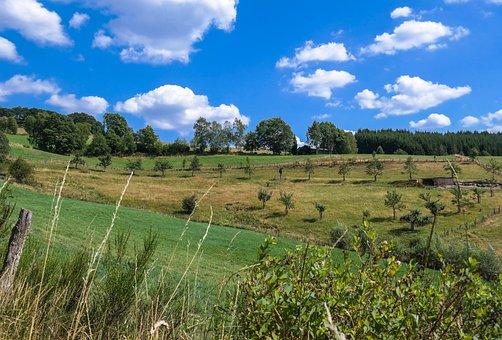 Trees, Meadow, Field, Landscape, Nature, Green, Sky