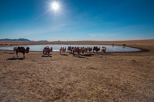 Landscape, Meadow, Step, Camel, Grazing, Frozen Pond
