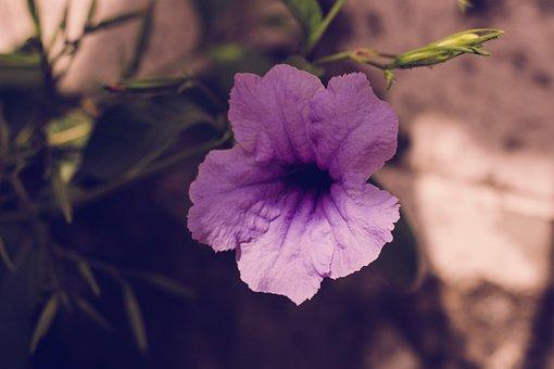 Flower, Plant, Purple, Flowers, Flora, Summer