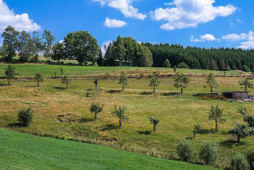 Trees, Rows Of Trees, Meadow, Field, Landscape, Nature
