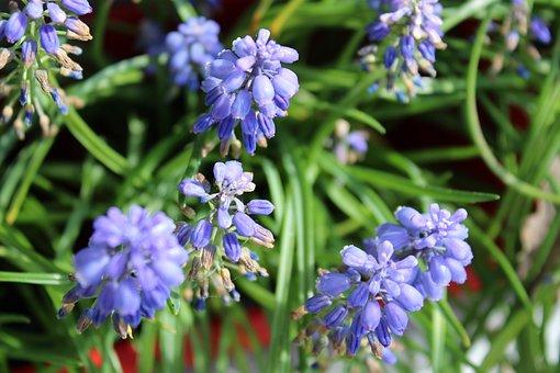 Flower, Summer, Violet, Nature, Spring