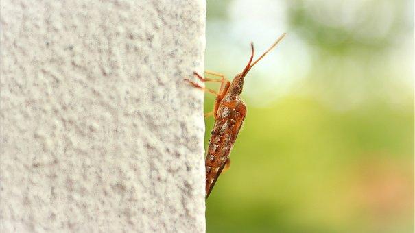 Pin Bug, Pine Bug, Bug, Insect, Beetle, Brown Beetle