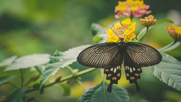 Monsoon, Kerala, Butterfly, Floral, Nature, Blossom