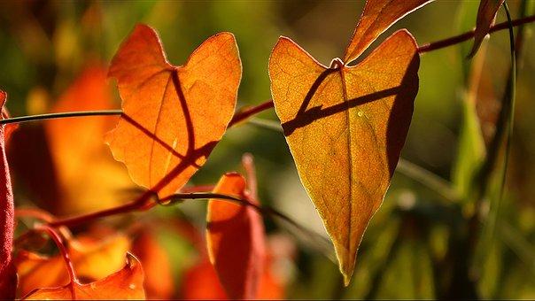 Autumn, Late Summer, Heart, Love, Cozy, Coziness