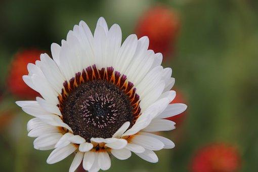 Flowers, White, Heart, Nature, Summer, Garden