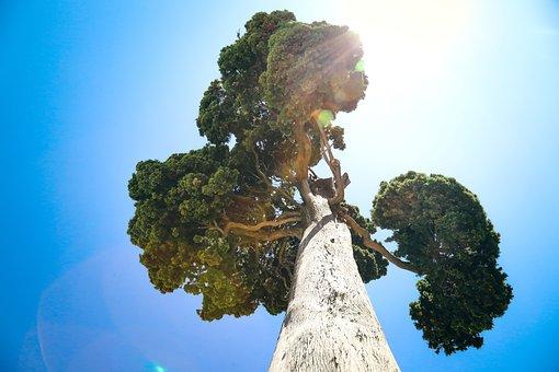 Pine, Trunk, Tree, Eternity, Nature, Larch