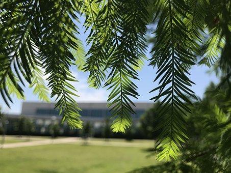 Leaves, Tree, Light Through Leaves, Light Through Tree