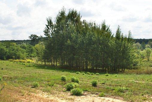 Tree, Meadow, Landscape, Figure, Green, Field, Grass