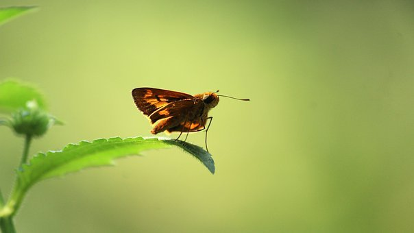 Kerala, India, Butterfly, Leaf, Green, Insect, Nature