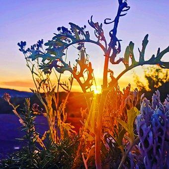 Sunset, Nature, Landscape, Evening, Sky, Dusk, Sunlight