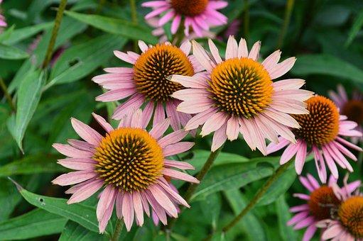 Flowers, Summer, Spring, Plant, Nature, Garden, Bloom