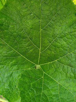 Plants, Leaf, Green, Nature, The Nature Of The, Botany