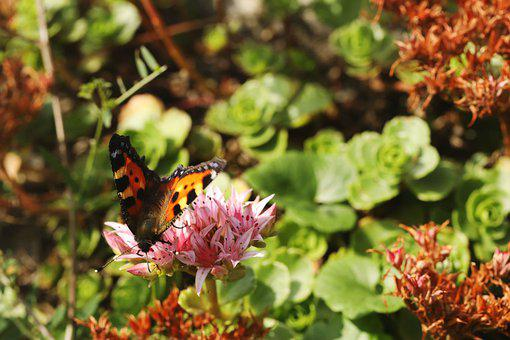 Butterfly, Insect, Animal, Flower, Summer, Wings