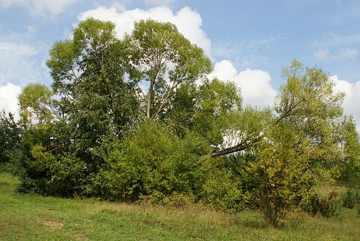 Tree, Beauty, Nature, Landscape, Sky, Summer, Green