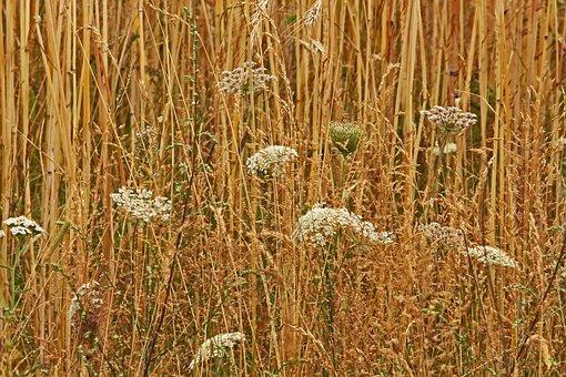 Field, Harvest, Lane, Wild Flowers, Summer, Cereals